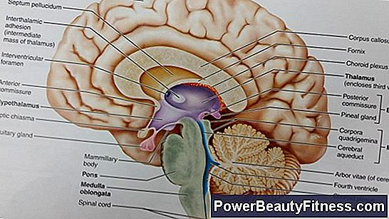 What Are The Functions Of The Cerebral Peduncles? 💪💪 All About ...