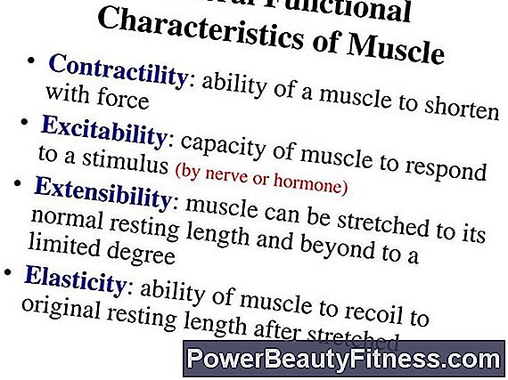 Muscle System Characteristics