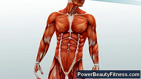 Definition Of The Muscular System