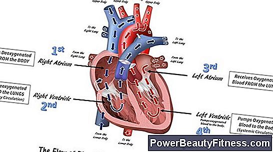 How Does The Cardiovascular System Help Maintain Homeostasis?