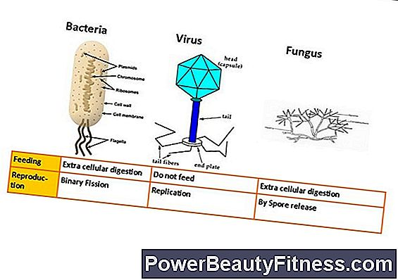 The Differences Between Fungi And Bacteria