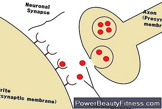 The Effects Of Curare On Nerve Impulses