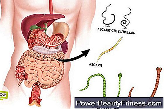 Types Of Worms In The Human Body