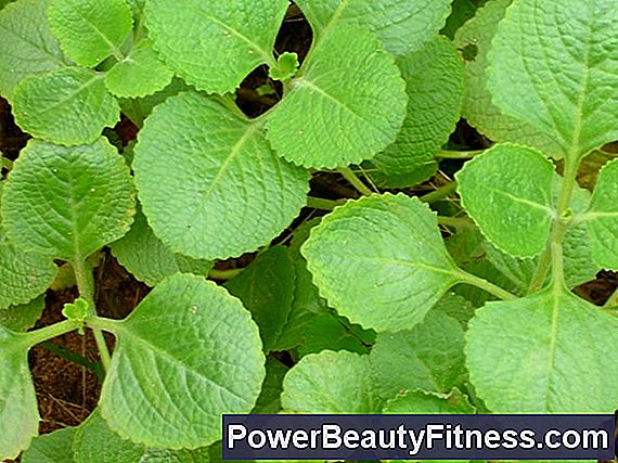 Uses Of Dried Mint Leaves