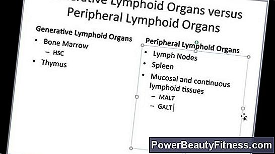 What Are The Primary Lymphoid Organs