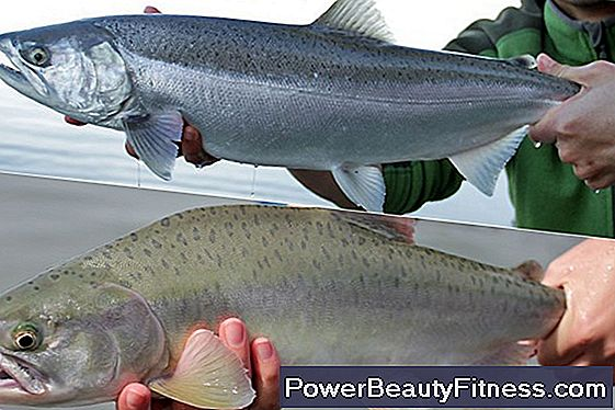 Differences Between Salmon And Pink Salmon