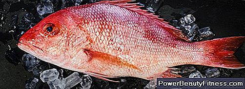 Red Snapper Nutrition