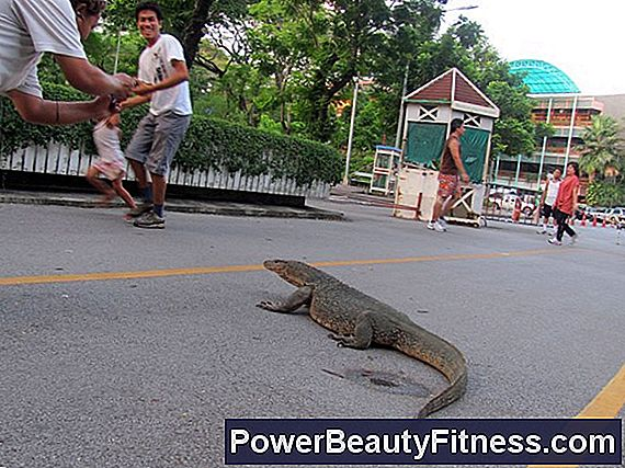 Are Lizards A Good Exercise For The Arms?