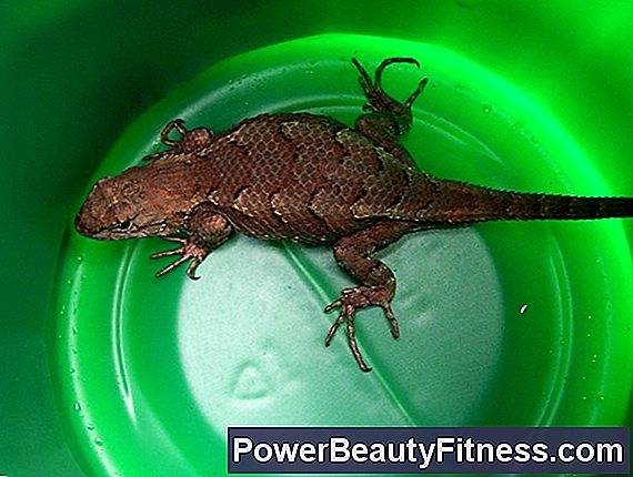 How To Make Lizards (Pushups) Easier