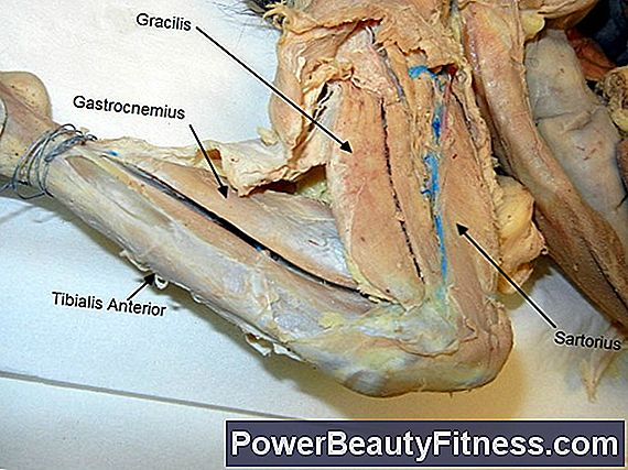 How To Work The Muscles Of The Clavicle
