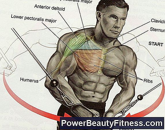 What Muscles Work The Frontal Elevations?