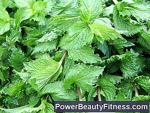 Health Benefits Offered By Mint Tea
