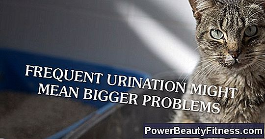 Why Does My Cat Urinate Too Much?