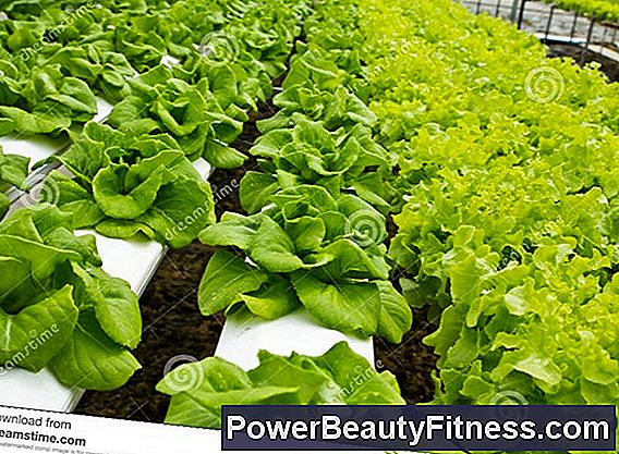 Are Healthy Hydroponic Vegetables?