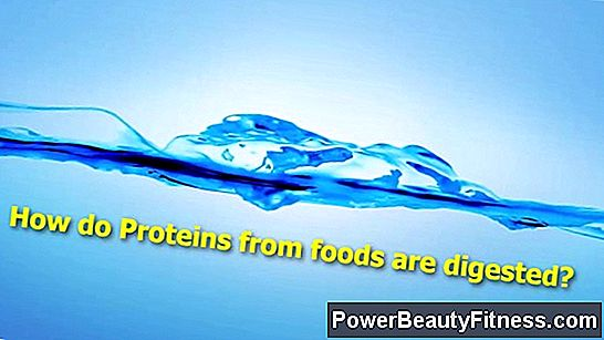 How Are Proteins Digested?