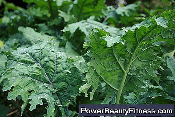 Vegetables That Are Good For Reducing Wrinkles