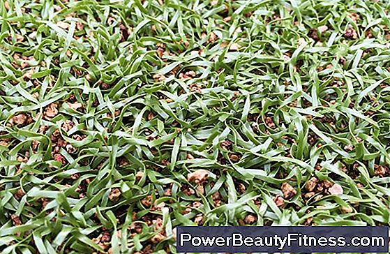 Pros And Cons Of Artificial Turf In Sports